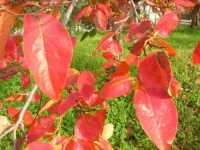 i colori dell'autunno - 19 novembre 2009   - Alcamo (2369 clic)