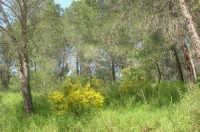 Bosco di Scorace - 3 maggio 2009  - Buseto palizzolo (1759 clic)