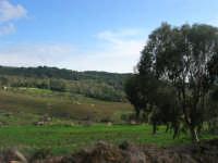 Bosco di Scorace - 18 gennaio 2009  - Buseto palizzolo (1888 clic)