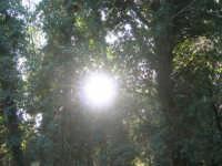 Bosco d'Alcamo - Riserva Naturale Orientata - sul monte Bonifato - 8 dicembre 2006  - Alcamo (892 clic)