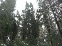 neve sul monte Bonifato - Riserva Naturale Orientata Bosco d'Alcamo - 15 febbraio 2009               - Alcamo (1910 clic)