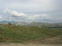 la campagna agrigentina - 9 novembre 2008   - Ribera (2220 clic)
