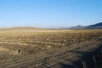 GALLITELLO - campo di meloni gialli: ciò che è rimasto - 2 ottobre 2007  - Alcamo (1349 clic)