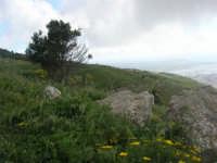 sul monte Erice - 1 maggio 2009   - Erice (1826 clic)