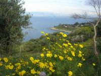 panorama - 19 aprile 2009  - Riserva dello zingaro (2464 clic)