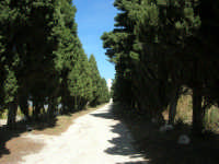 sul colle Pianto Romano, il viale alberato (Viale della Rimembranza) che collega l'ossario ad una stele - 4 ottobre 2007    - Calatafimi segesta (910 clic)