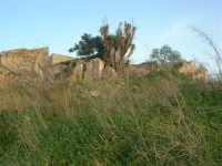 antico baglio - 3 marzo 2009  - Alcamo (2463 clic)