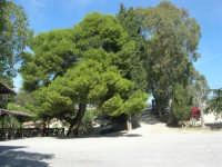area archeologica: posto di ristoro - 4 ottobre 2007  - Segesta (1591 clic)