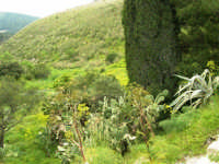 valli e colline attorno la zona archeologica - 12 aprile 2007  - Segesta (2078 clic)