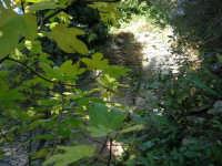 Bosco d'Alcamo - Riserva Naturale Orientata - sul monte Bonifato: La Funtanazza, grande serbatoio pubblico di età medievale - 8 dicembre 2006  - Alcamo (2829 clic)