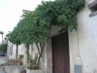 case di periferia - una pergola - 19 settembre 2007  - Scopello (849 clic)