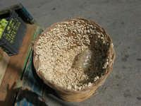 cesto con babbaluci (lumache) - 21 luglio 2007   - Castellammare del golfo (3250 clic)