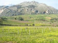 vigneti, in primo piano, e Monte Sparagio - 21 febbraio 2009  - Balata di baida (5204 clic)