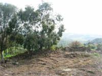Bosco di Scorace - 18 gennaio 2009  - Buseto palizzolo (2032 clic)