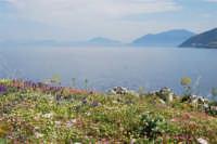 Capo San Vito - vista sul golfo di Castellammare - 10 maggio 2009  - San vito lo capo (1631 clic)