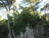 Bosco d'Alcamo - Riserva Naturale Orientata - sul monte Bonifato: La Funtanazza, grande serbatoio pubblico di età medievale - 8 dicembre 2006  - Alcamo (2014 clic)