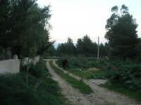 lungo la strada . . . - 24 febbraio 2008  - San vito lo capo (551 clic)