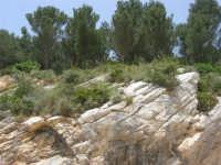 alberi e rocce - 17 maggio 2009  - Calatafimi segesta (2943 clic)