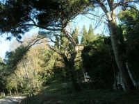 Bosco d'Alcamo - Riserva Naturale Orientata - sul monte Bonifato - 8 dicembre 2006   - Alcamo (834 clic)