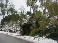 neve sul monte Bonifato - 15 febbraio 2009     - Alcamo (2051 clic)