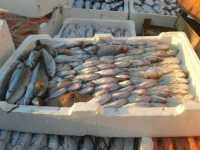 al porto - pesci - 7 dicembre 2009   - Sciacca (4601 clic)