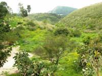 valli e colline attorno la zona archeologica - 12 aprile 2007  - Segesta (1899 clic)