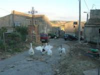 periferia: animali da cortile in libertà - 9 ottobre 2007    - Vita (3247 clic)