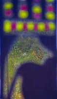fiori riflessi nello specchio del peccatometro(partic.scultura al lago di S. Renda)  - Piana degli albanesi (2973 clic)