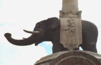Fontana dell'elefante, simbolo della città di Catania,posta al centro della piazza. (5585 clic)