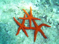 ancora meraviglie del mondo sottomarino  - Letoianni (4618 clic)