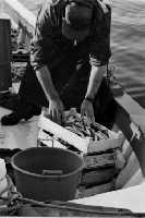 un pescatore che rientra con il frutto del suo lavoro  - Isola delle femmine (2889 clic)