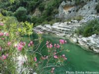 Laghetti  - Cava grande del cassibile (6452 clic)
