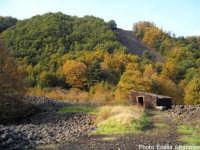 Paesaggio etneo: i castagneti  - Etna (3062 clic)