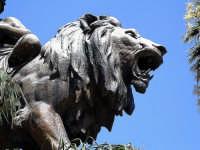 Teatro Massimo - Particolare, leoni ingresso  - Palermo (6110 clic)