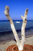 La spiaggia di Vendicari  - Vendicari (1989 clic)