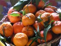 I mandarini  - Catania (2965 clic)