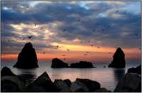 Gabbiani al ll'alba  - Aci trezza (4137 clic)