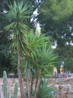 un'oasi di verde in una città PALERMO ISACCO