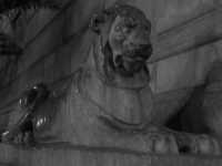 leone su piazza pretoria PALERMO ISACCO