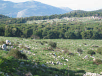 monte pellegrino  - Palermo (2734 clic)