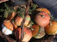 Cesto di zucche  - Castelbuono (3542 clic)