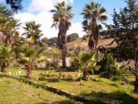 Campagne di Salemi. Particolare di un antico giardino con palme secolari.-   - Salemi (4738 clic)