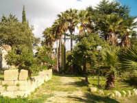 Campagne di Salemi. Particolare di un antico giardino con palme secolari.-   - Salemi (4350 clic)