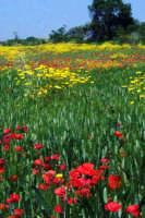 primavera 2003  - Militello in val di catania (3302 clic)
