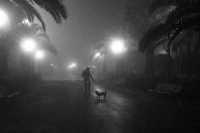 Villa comunale- In una sera di nebbia  - Militello in val di catania (3682 clic)