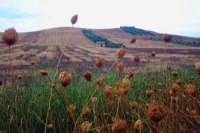 A Siuna Piana di catania, territorio di Palagonia  - Palagonia (6300 clic)