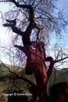 è la carcassa di un auto finita su un albero, gettata da una strada che sovrasta questa splendida zona, nei pressi della chiesetta di Santa Maria delle Grazie.   - Militello in val di catania (5548 clic)
