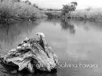 Riserva naturale  - Donnalucata (2851 clic)