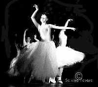 Saggio Danza 2003  - Militello in val di catania (4277 clic)