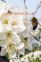 Dettaglio di primavera  - Militello in val di catania (3282 clic)